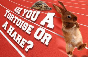 Are You A Tortoise Or A Hare?