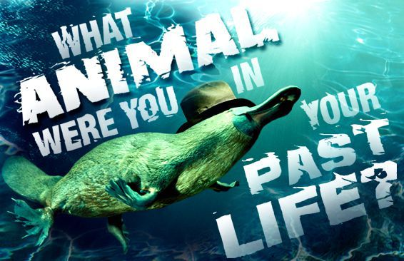 What Animal Were You in Your Past Life