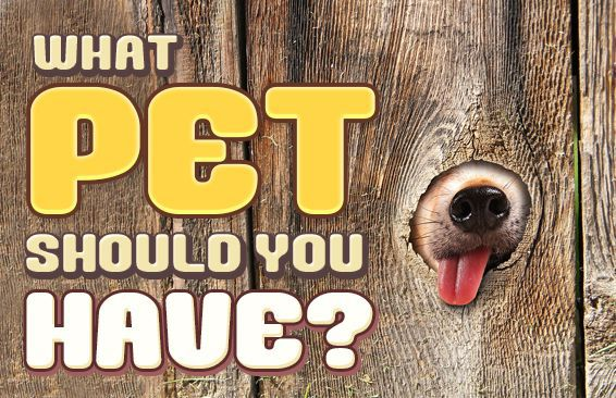 What Pet Should You Have?