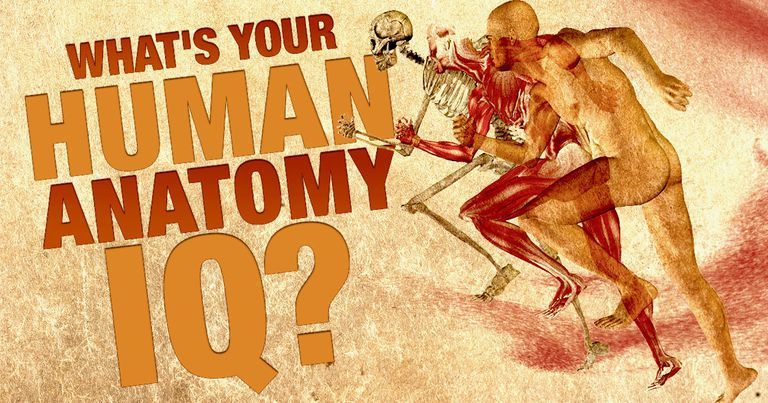 Can You Pass This Human Anatomy Quiz?