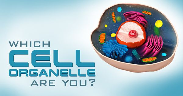 Which Cell Organelle Are You?