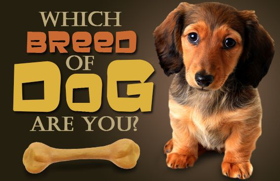 Which Breed Of Dog Are You?