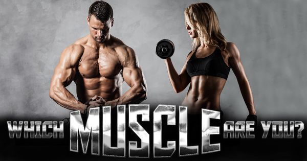 Which Muscle Are You?