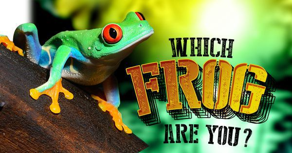 Which Frog Are You?