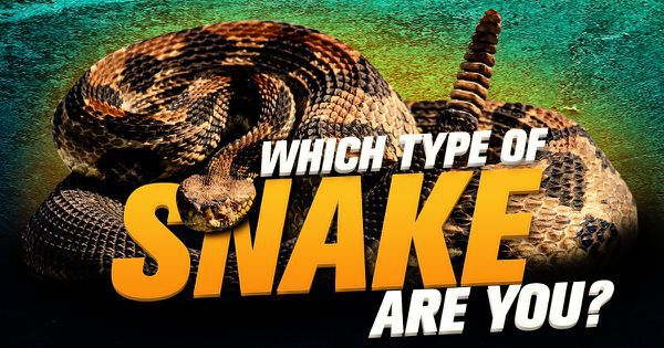 Which Type Of Snake Are You?