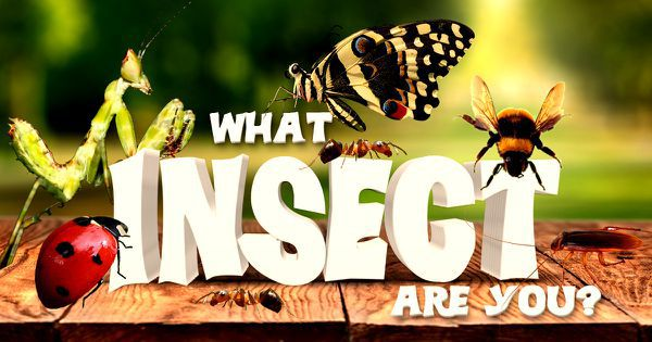 What Insect Are You?
