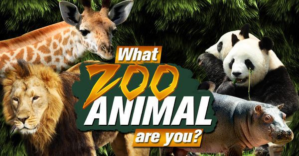 What Zoo Animal Are You?