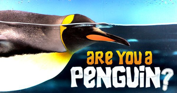 Are You A Penguin?