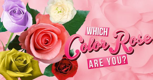 Which Color Rose Are You?