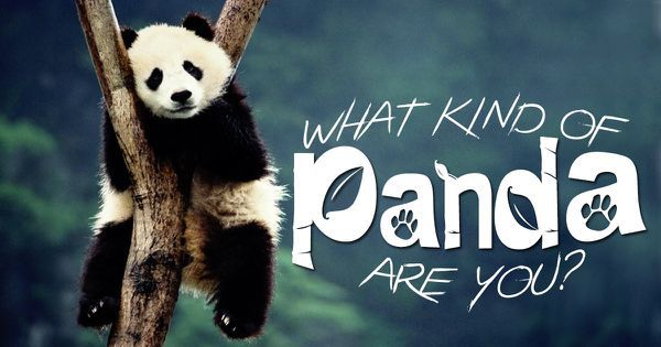 What Kind Of Panda Are You?