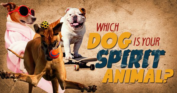 Which Dog Is Your Spirit Animal?