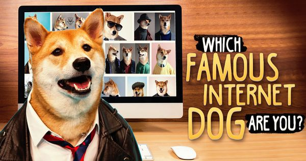 Which Famous Internet Dog Are You?