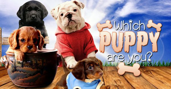 Which Puppy Are You?