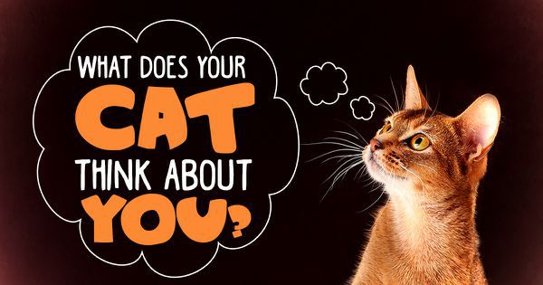 What Does Your Cat Think About You?