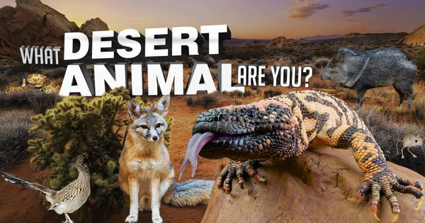 What Desert Animal Are You?