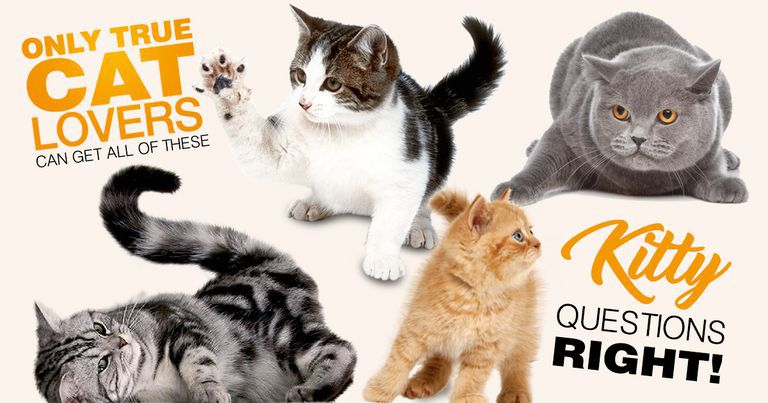 Only True Cat Lovers Can Get All Of These Kitty Questions Right!