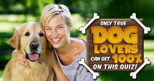 Only True Dog Lovers Can Get 100% On This Quiz!