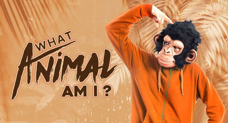 What Animal Am I?
