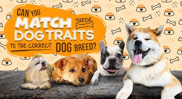 Can You Match These Dog Traits to the Correct Dog Breed?